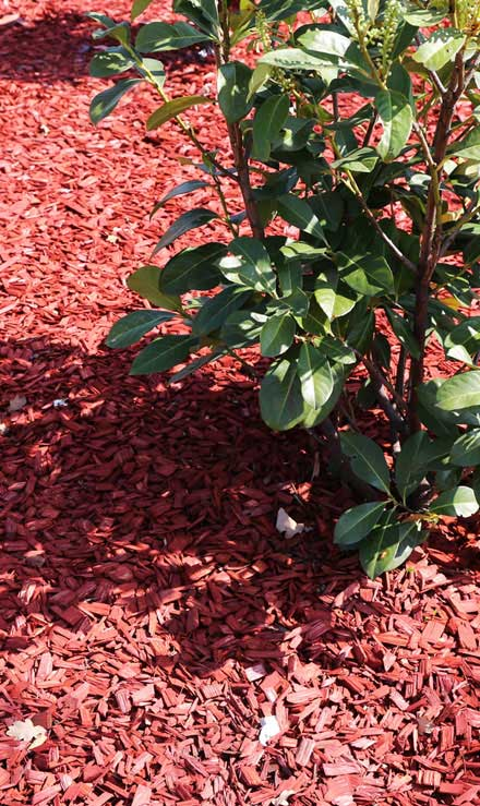 Chatwells' Landscapes Residential Mulching